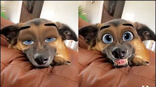 😹Cute Pets And Funny Animals Compilation