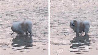 BRAVE CRAB FENDS OFF NOSY DOG DESPITE BEING SUBMERGED UNDERWATER