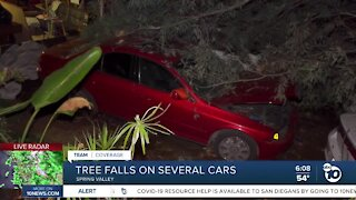 Large tree comes down on cars in Spring Valley