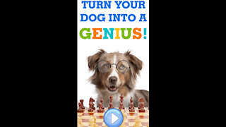 Turn Your Dog Into A Genius!