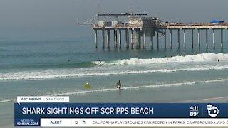 Shark sightings off Scripps Beach