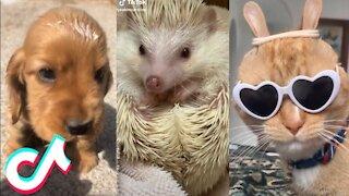 10 Minutes Straight of the Cutest Pets on Tiktok 🥰