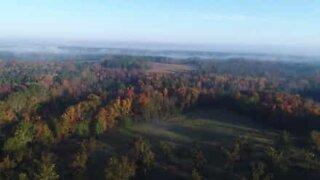 I colori dell'autunno tra la nebbia della Carolina del Sud