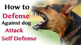 How to survive aggressive dog attack