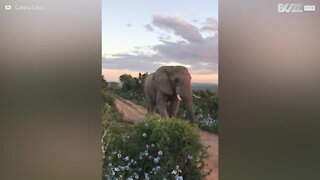 L'emozionante incontro con un elefante selvatico