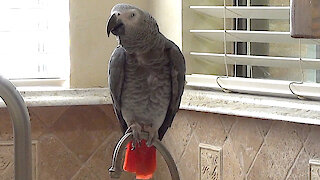 This very generous parrot offers a delicious variety of foods