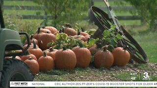 Bellevue Berry Farm features all things fall