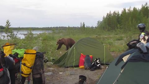 Bear gets too close for comfort for these campers