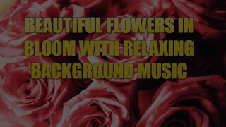 Collection Of Beautiful Flowers in Bloom With Relaxing Background Music.
