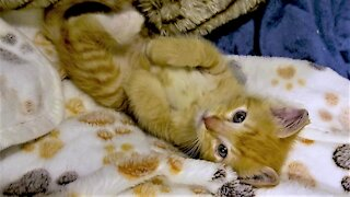 Kitten wakes up happy after first night in new sanctuary