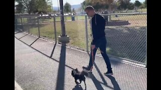 Great tips for Vegas dog owners now that it's cooler outside
