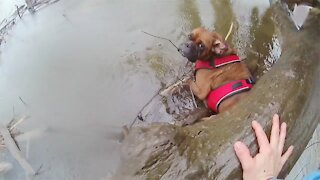 Officers Rescue Stranded Dog From Icy Creek In New York