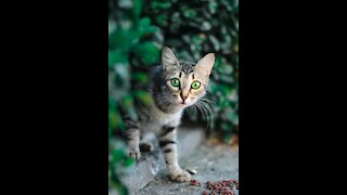 A cat is hunting