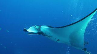 Adventurous Scuba Divers Swim With The Giants Of The Sea