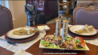 Polite Great Dane Has Lovely Table Manners