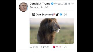 """TRUMP tweeted this saying """" So Much Truth """""""