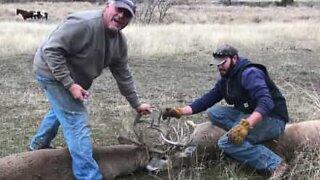 Miehet vapauttavat sarvistaan jumiin jääneet peurat