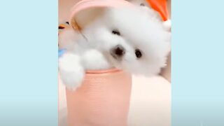 Cute PUPPIES! Funny Dog Compilation - Baby Animals Super Cute!