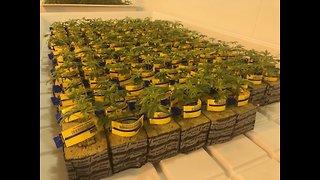 Where are Ohio's medical marijuana dispensaries?