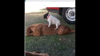 dogs lovers forever