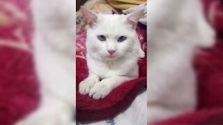 Happy birthday my little cat