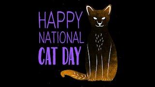 National cat day [GMG Originals]