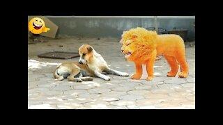 Pranks Dog - Pranks Dog - Let's Watch