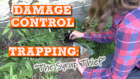 S2:E19 Damage Control Trapping: The Syrup Thief | Kids Outdoors