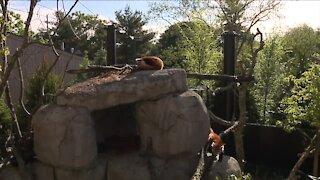 Wild Asia exhibit opens at Akron Zoo