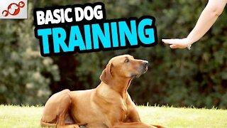 Basic Dog Training – Commands Every Dog Should Know!