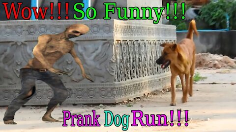 Amazing wow !!! Fake Tiger Prank Dog 🐶 Run So Funny Try not to laugh, very cool video ... 🐶