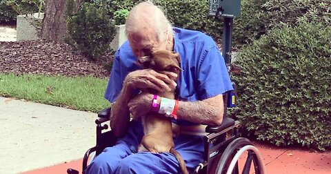 Elderly Man Rescued By Chihuahua While Having Stroke