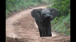 Baby elephant breaks into a house's backyard in India