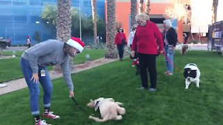 Therapy dogs cheer up patients at PCH