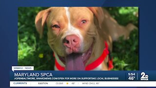 Aidan the dog is up for adoption at the Maryland SPCA
