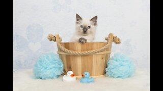 2 Weeks Old Kitten First Bath
