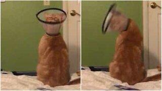 Gato com colar protetor acaba fazendo dança hilária