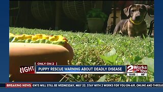 Puppy rescue warning about deadly disease