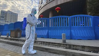 W.H.O. To Release Report On Coronavirus Origins Report