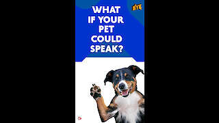 What if your pet could speak? *