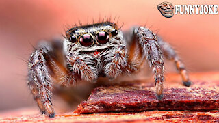 My Spider Dances Better - Don't You Believe It? Watch The Video
