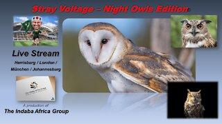 Stray Voltage - Night Owls Edition (22 Mar 2021)