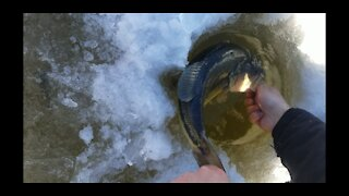 Montana Largemouth Bass