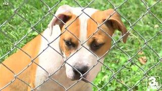Nebraska Humane Society sees increase in heat-related calls
