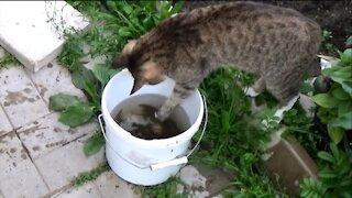Cat steals fish