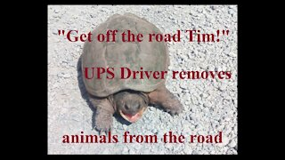UPS Driver removes animals from the road
