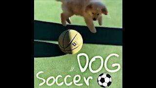 A soccer dog🤣