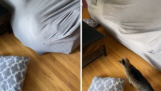 Silly pup manages to get stuck underneath couch cover