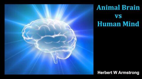 Animal Brain vs Human Mind - Herbert W Armstrong - Radio Broadcast