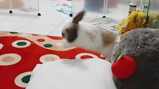 Playful bunny rabbit can't stop doing binkies